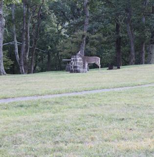 9-10-2010 Shenandoah Cabin Vacation-1-101