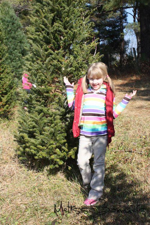Christmas Tree 2012 (1 of 1)-3