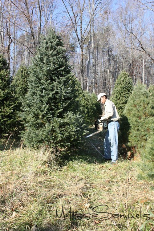 Christmas Tree 2012 (1 of 1)-9