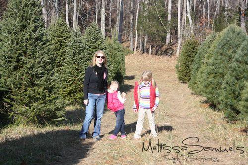 Christmas Tree 2012 (1 of 1)-5